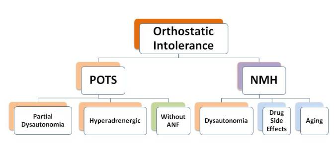 orthostatic hypotension | postural hypotension causes, symptom & cure, Skeleton