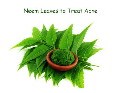Neem Leaves to treat Acne