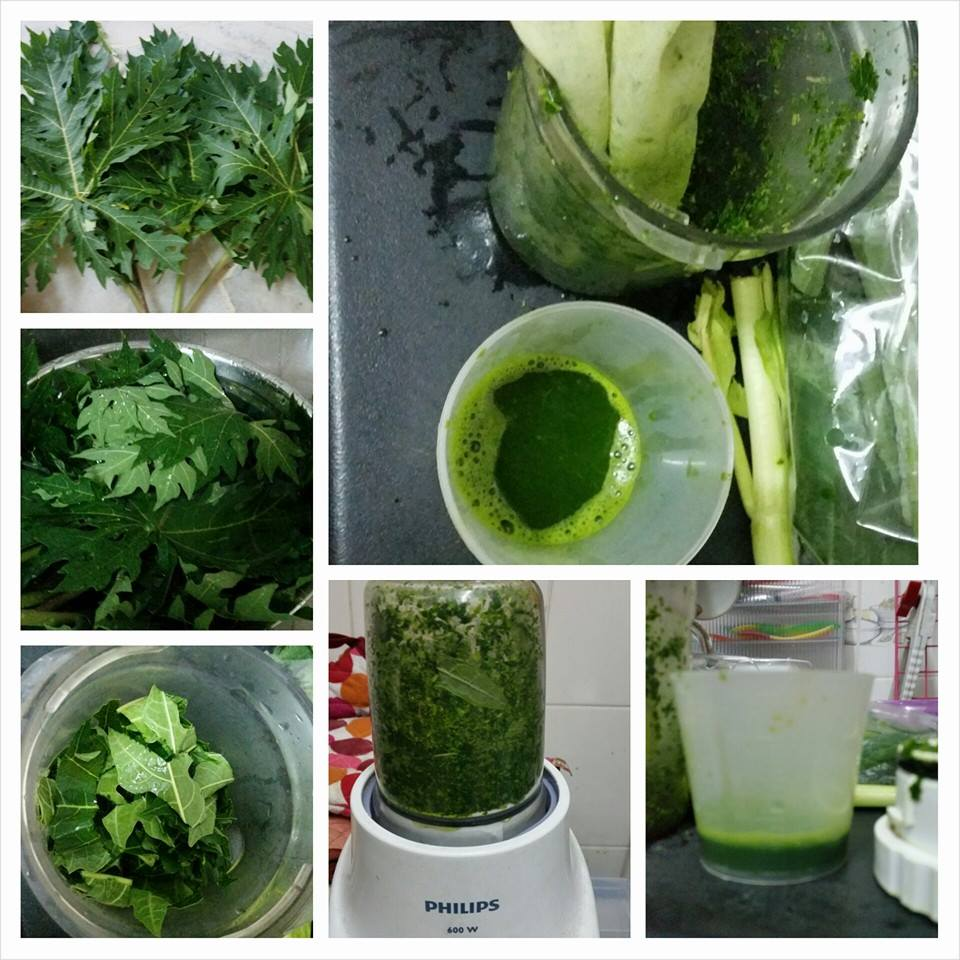 How to prepare papaya leaf juice to treat dengue
