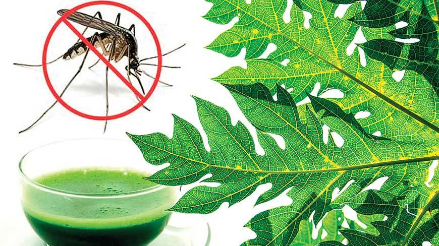how to use papaya juice for Dengue fever