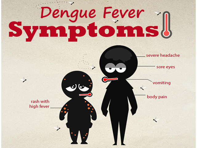 What are the Symptoms of Dengue Fever ? Signs of Dengue in Adults