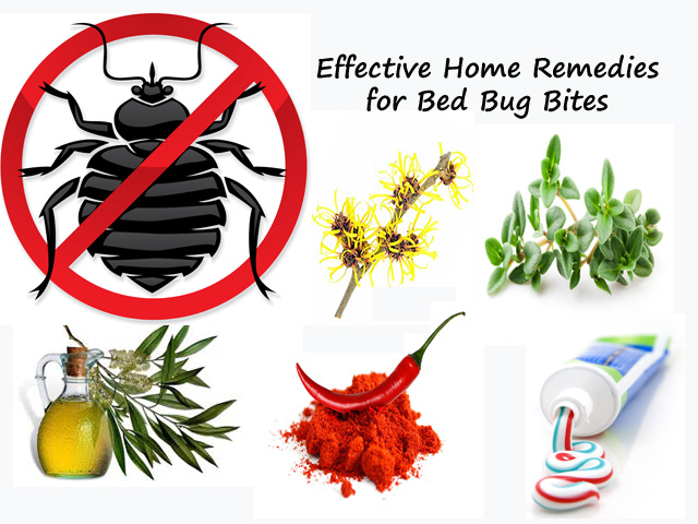 How to stop bed bugs – Home Solutions for Bed Bugs Bites