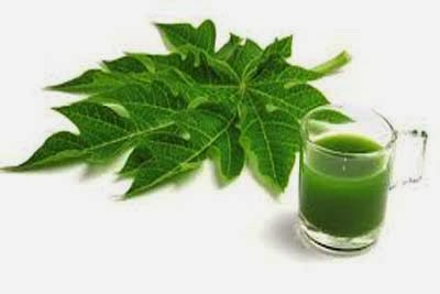 Dengue Treatment with papaya leaves